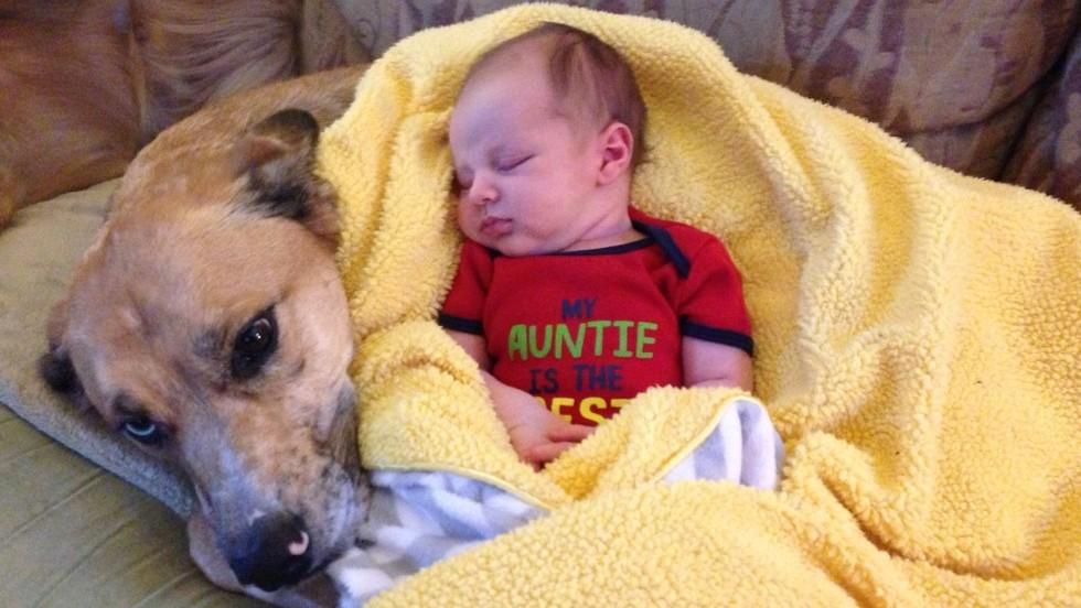 Newborns Pets Maternity Nurse Help Tips Advice Best Options